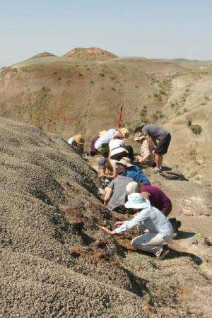 A McGill field crew collects fossils as part of a field course in Grasslands National. Credit: Hans Larsson/Emily Bamfort