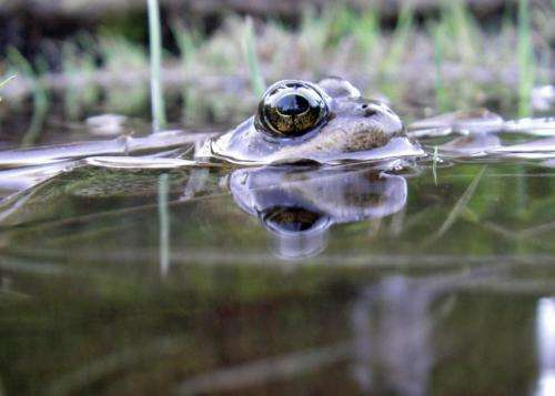 Amphibians in a vice: Climate change robs frogs, salamanders of refuge