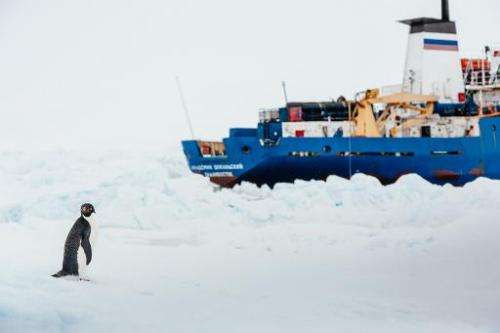 An adelie penguin near the MV Akademik Shokalskiy, still stuck in the ice in Antarctica, on December 31, 2013