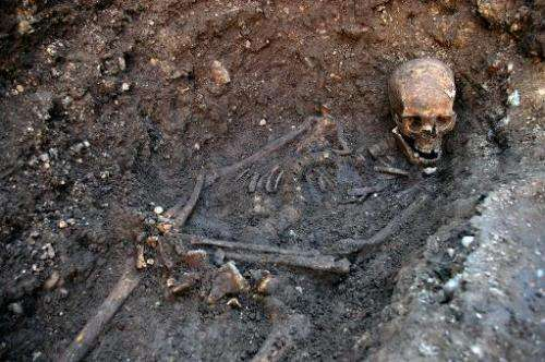 An undated handout picture released on February 4, 2013 from the University of Leicester shows the skeleton of king Richard III
