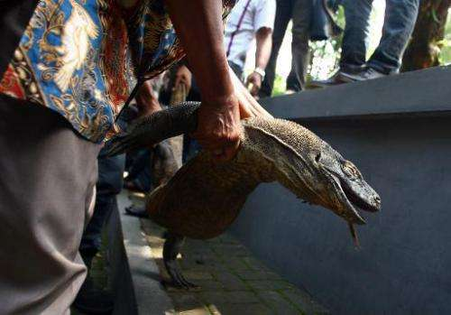A plain-clothes policeman holds a dead komodo dragon, at Surabaya zoo in East Java, Indonesia, on February 1, 2014