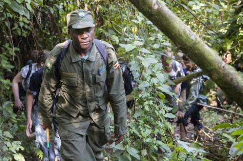 A ranger guides a group of tourists through Bwindi Impenetrable National Park, in Uganda, on May 24, 2014, as they go gorilla tr
