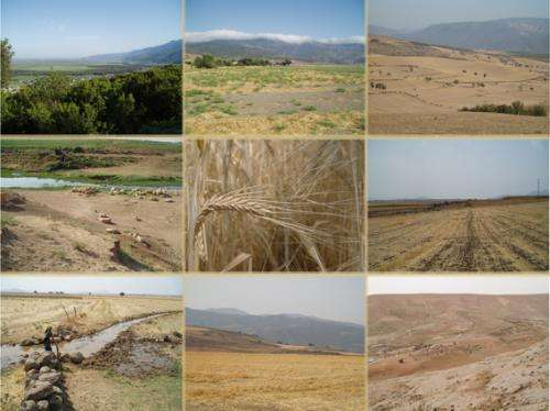 Archaeobotanists probe ancient grains to map drought stress, human responses in Ancient Near Eastern societies