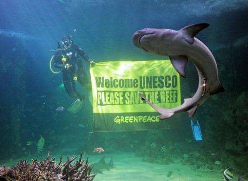 A reef shark (R) swims past as Sydney Aquarium divers unveil a Greenpeace banner urging UNESCO to save the Great Barrier Reef, o
