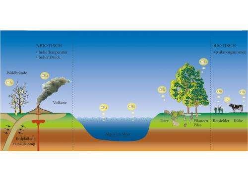 At the methane source of plants