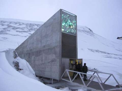 Barley seeds  preserved in Svalbard Global Seed Vault