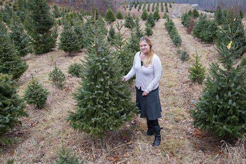 Big data and the science of the Christmas tree