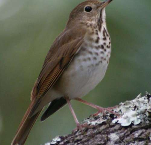 Birdsong and human music have common principles