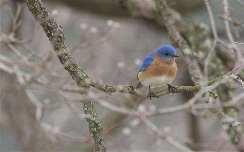 Bluebirds struggle to find happiness on island paradise