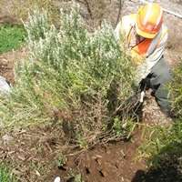 Breaking new ground on restoring healthy soil
