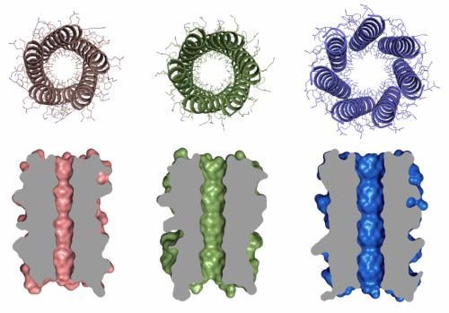 Bristol team creates designer 'barrel' proteins