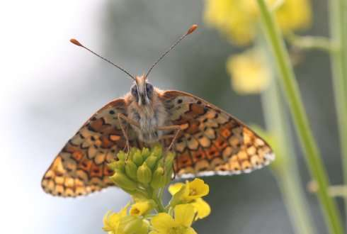 Butterflies illustrate the effects of environmental change