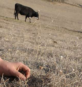 California ranchers anticipate devastating drought impacts, study finds