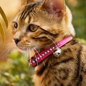 Cat collars provide big benefits for low risk