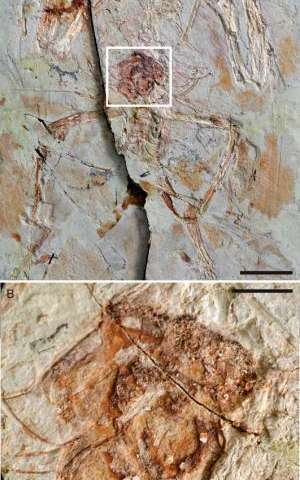 Chinese scientists map reproductive system's evolution as dinosaurs gave rise to birds