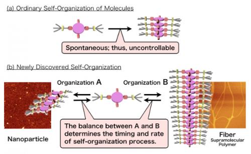 Controlling the 'length' of supramolecular polymers through self-organization