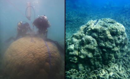 Coral death imminent on Great Barrier Reef