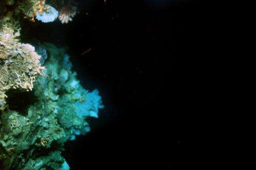 Coral reef discovered off Greenland