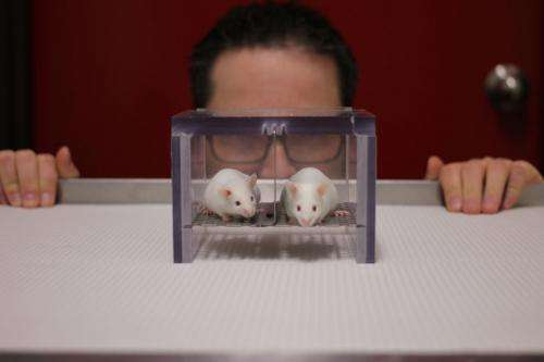 The scent of a man: Mice and rats stressed by male experimenters
