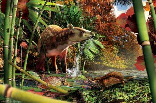 CU-Boulder-led team identifies fossils of tiny, unknown hedgehog