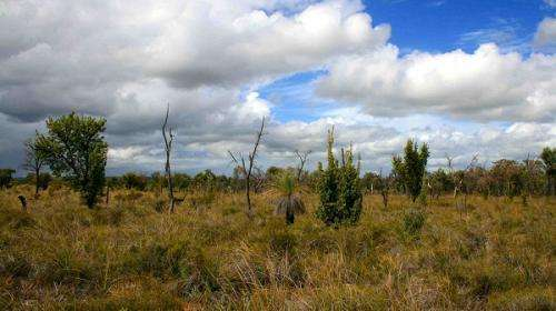 Dieback devastates south-west bird communities