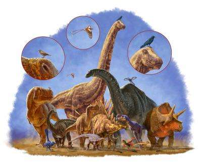 Dinosaurs: All the shapes and sizes