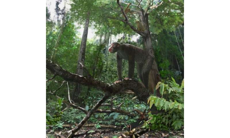Discovery by Baylor University researchers sheds new light on the habitat of early apes