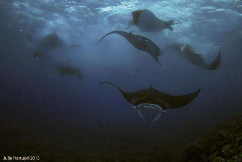 Do Guam mantas plan moon parties?
