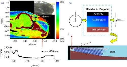 dolphin sonar 2