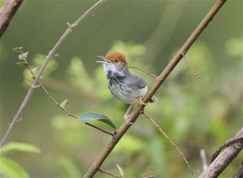 Dozens of new flora, fauna species in Myanmar (Update)