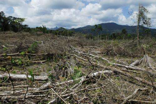 Drug trafficking leads to deforestation in Central America