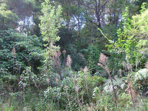"Enhanced online resource gives land managers ""heads up"" for invasive plants of Australia's future"