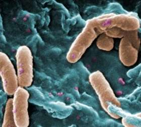 Exploring a microbial arms race