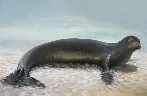 Extinct relative helps to reclassify the world's remaining 2 species of monk seal