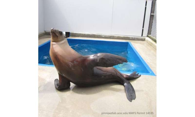 Beat-keeping sea lion shows surprising rhythmic ability