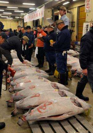 Fishmongers check frozen bluefin tuna on auction at the first trading of the new year, at Tokyo's Tsukiji fish market, on Januar
