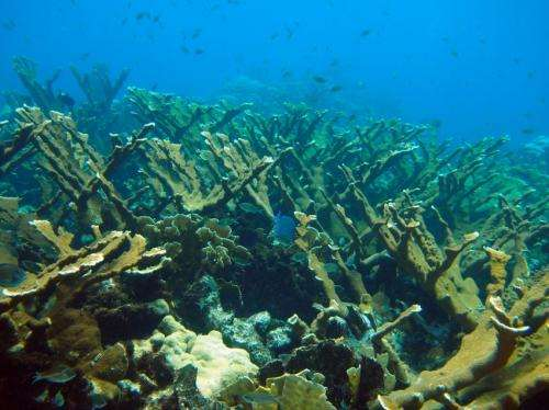 Genetics reveal that reef corals and their algae live together but evolve independently