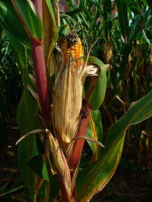 Going deep to improve maize transcriptome