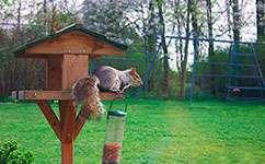 Grey squirrels stop garden birds using feeders
