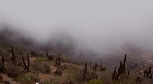 Harvesting fresh water from fog