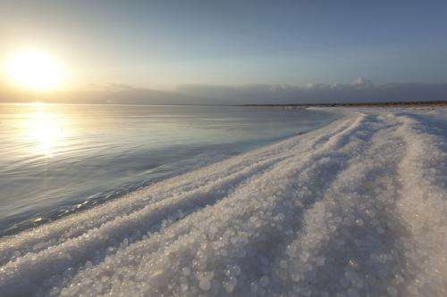 Salt needed: Tolerance lessons from a dead sea fungus