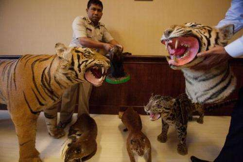 Indonesian policemen show off the remains of preserved Sumatran tigers (L and R) and other animals after seizing them in Takengo