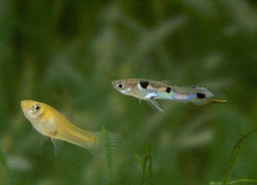 Invasion of the monogamous fish