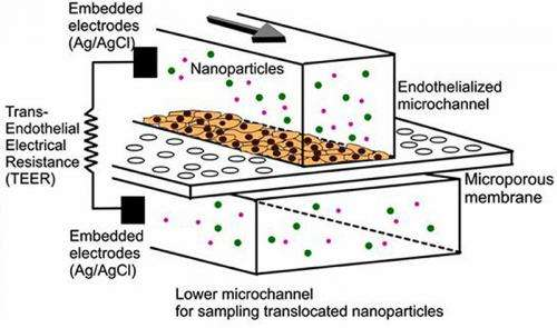 In vitro innovation: Testing nanomedicine with blood cells on a microchip