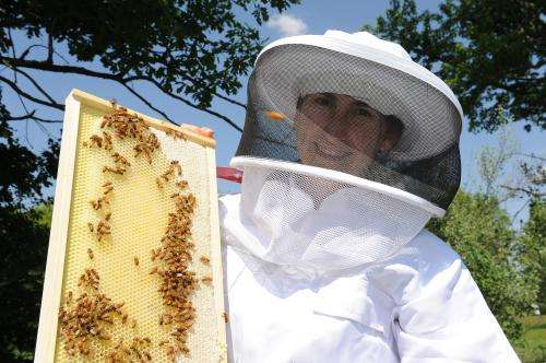 Iowa State researchers are piecing together causes of decline in honey bees