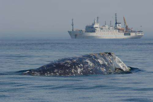 Keeping whales safe in sound