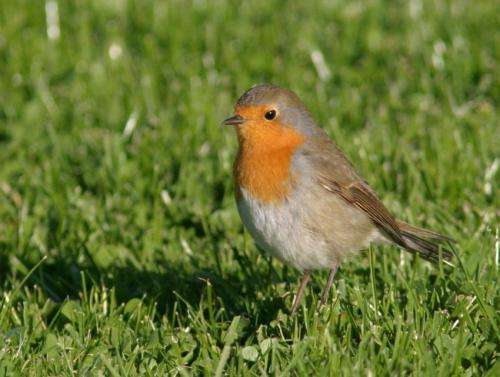 Radio waves affect migrating birds, study reports