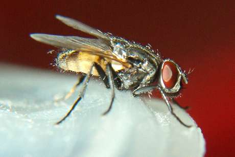 Kill flies by alternating pesticides, monitoring need