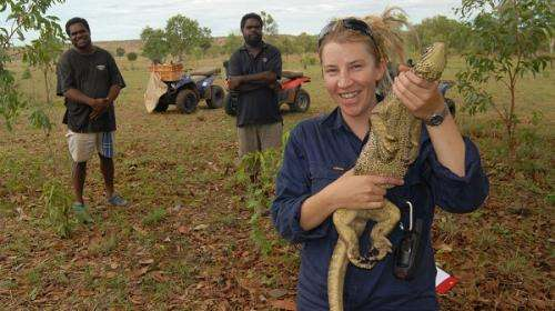 Kimberley goannas trained in cane toad taste-aversion