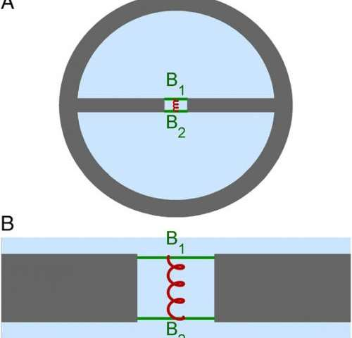 Layout of the double-beam waveguide